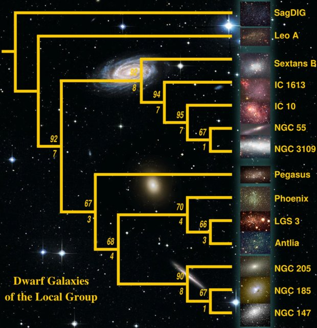 Cladogram on the Dwarf Galaxies of the Local Group